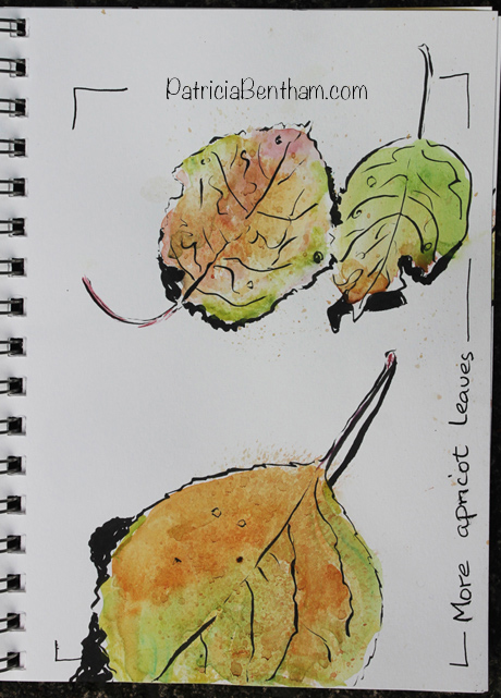 Apricot Leaves Art by Patricia Bentham