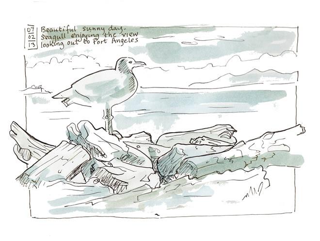 Seagull Gazing