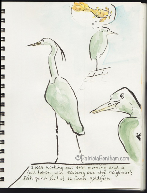 sketching the herons scoping the goldfish pond