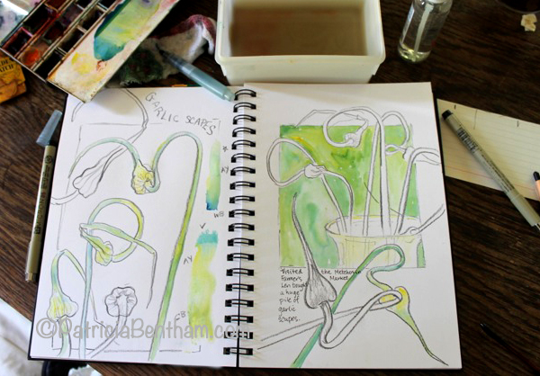 Sketching Garlic Scapes